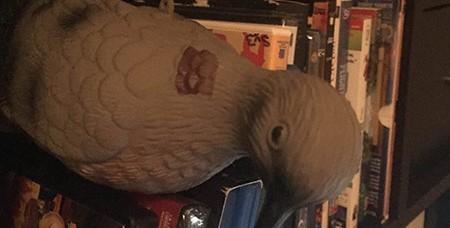 office-pigeon